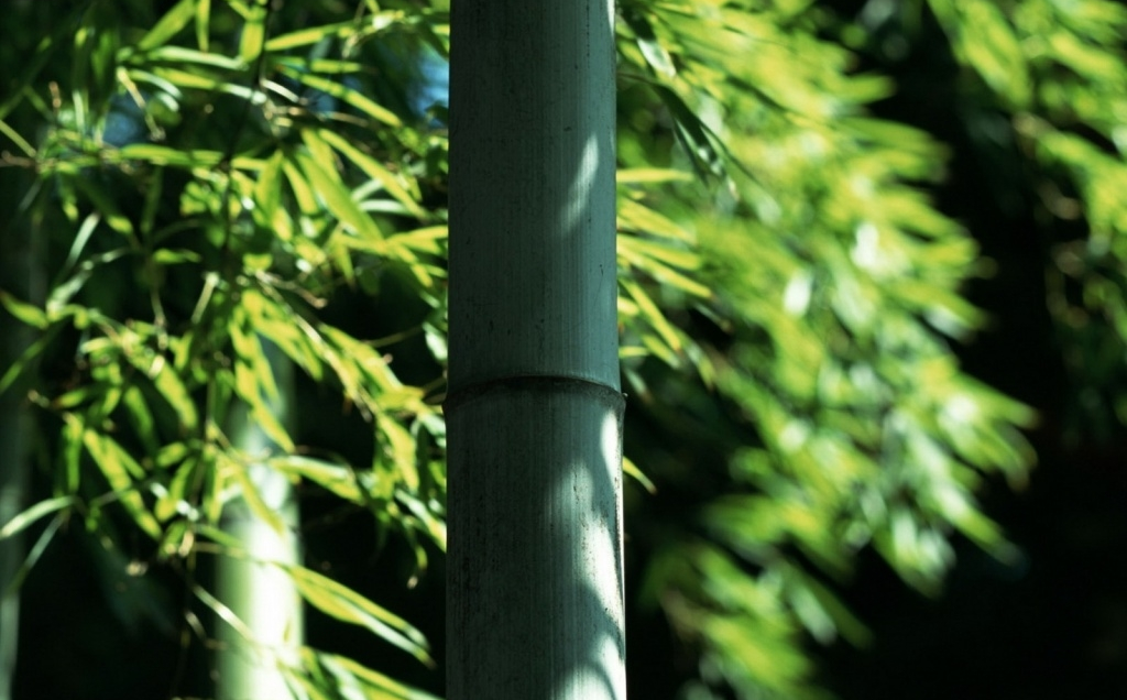Take care of your bamboo clothes